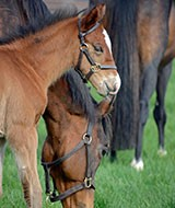 Rossdales Foal Care Course