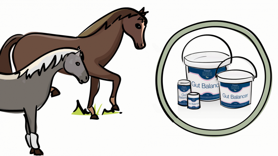 Your Horse's Digestive System Explained